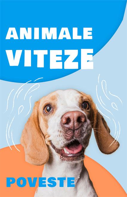 animale-viteze, povesti, teatru online