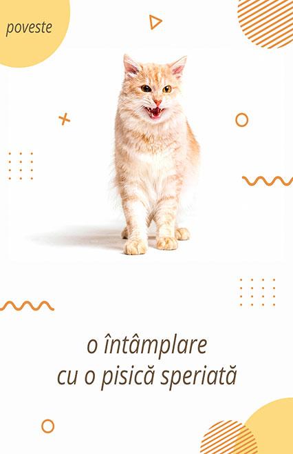 o-intamplare-cu-o-pisica-speriata, povesti, teatru online